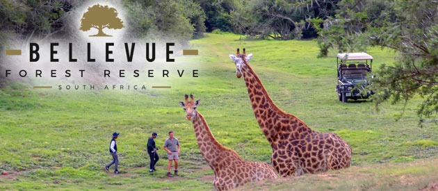 Bellevue Forest Reserve - Addo Elephant Park