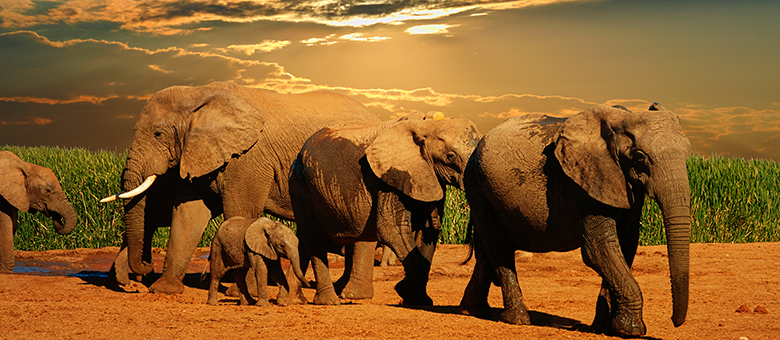 Addo Info, Accommodation, activities in Addo, Eastern Cape, South Africa, www.addo-info.co.za